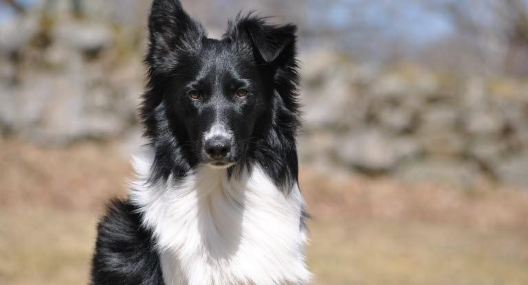 Fick hund Kostenlose Hund